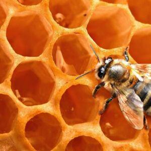 Naturpolc finomítatlan méhviasz pasztilla - 50g