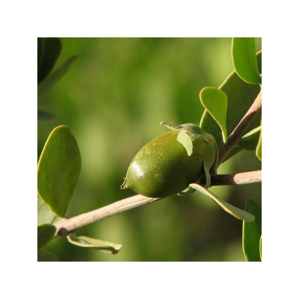 Naturpolc jojobaolaj - 50 ml